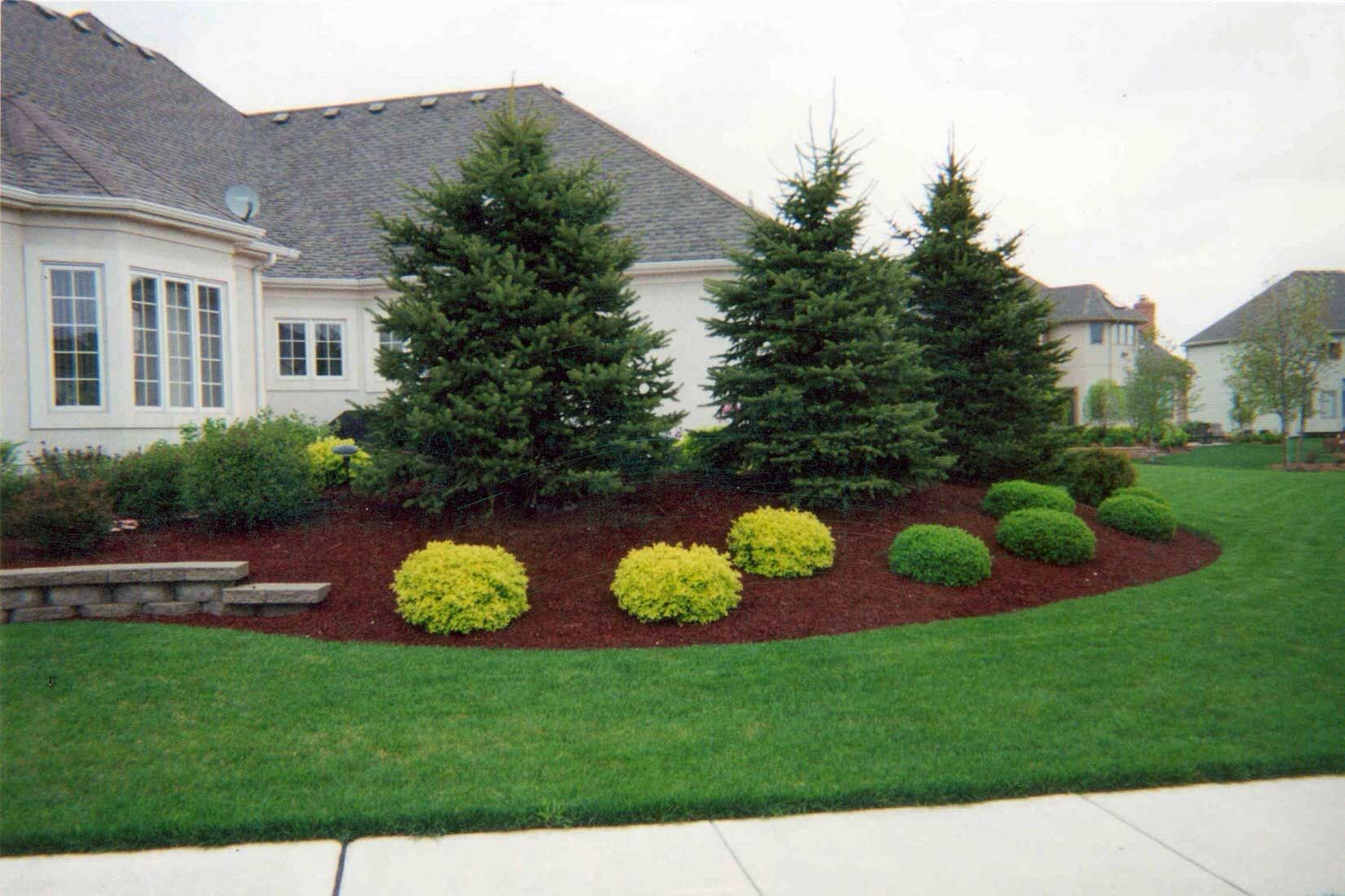 Ideas For Landscaping Under Evergreen Trees Evergreen Landscape