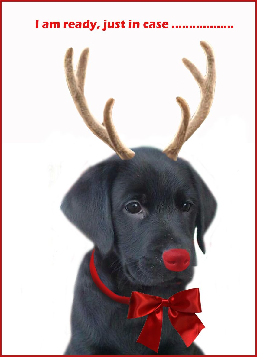 Black Lab Merry Happy Christmas Day Card Puppy Holiday Dogs Santa ...