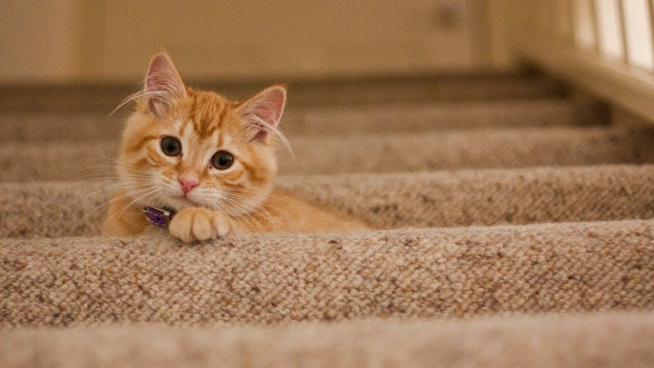 Free Cute Background Music For Your Videos Download Now Cute Backgrounds Cat Love Animal Rescue
