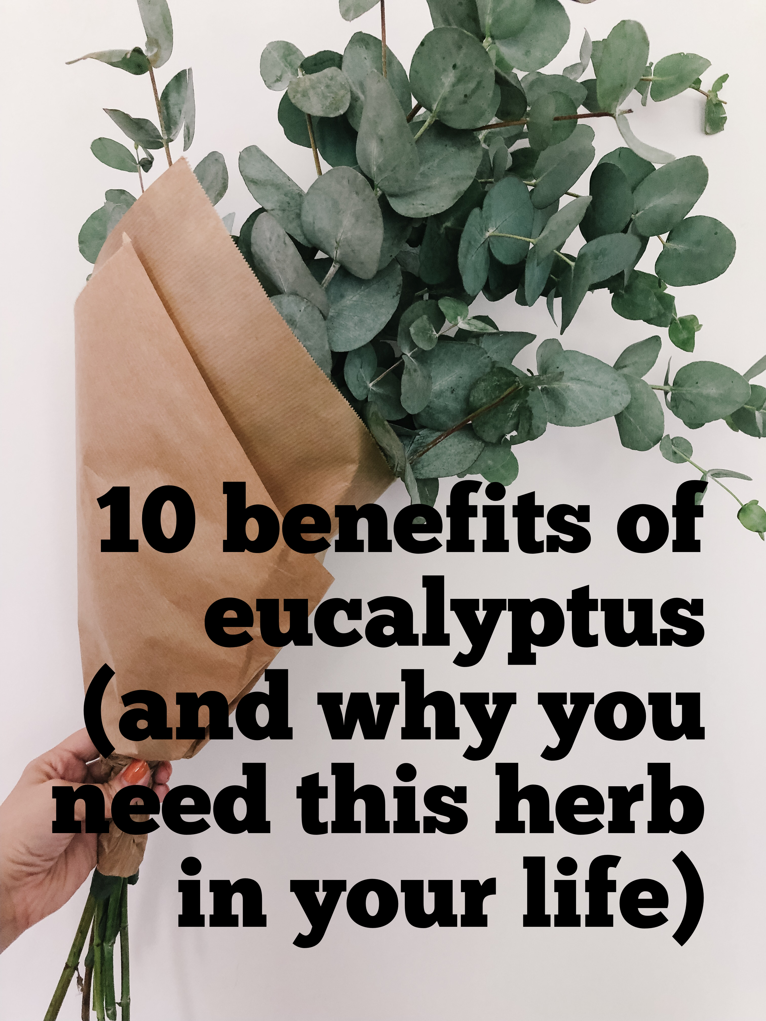 10 Benefits Of Eucalyptus And Why You Need This Herb In Your Life 365 Days Of Wellbeing Plant Benefits Herbal Education Eucalyptus Plant Indoor