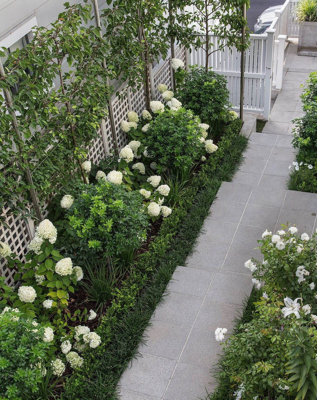 Ornamental pleached pears, white Hydrangea Limelight ... on White Patio Ideas id=90760