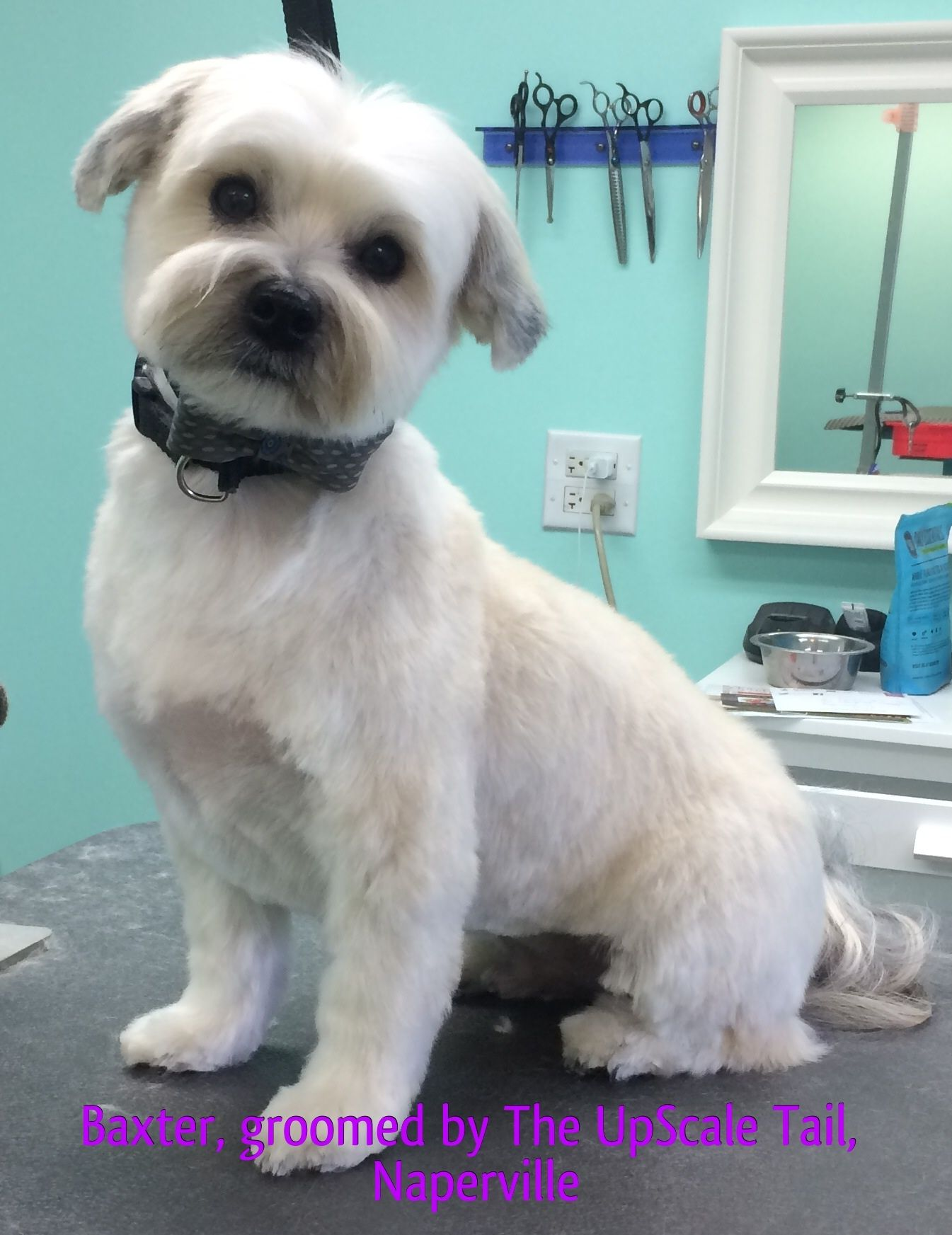 The Upscale Tail Pet Grooming Salon Naperville 630 632 Tail Pet Grooming Salon Pet Grooming Cat Grooming