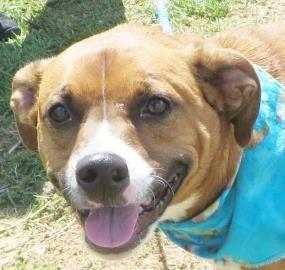 Adopt Poppyhere in Maine on Dog adoption, Terrier mix