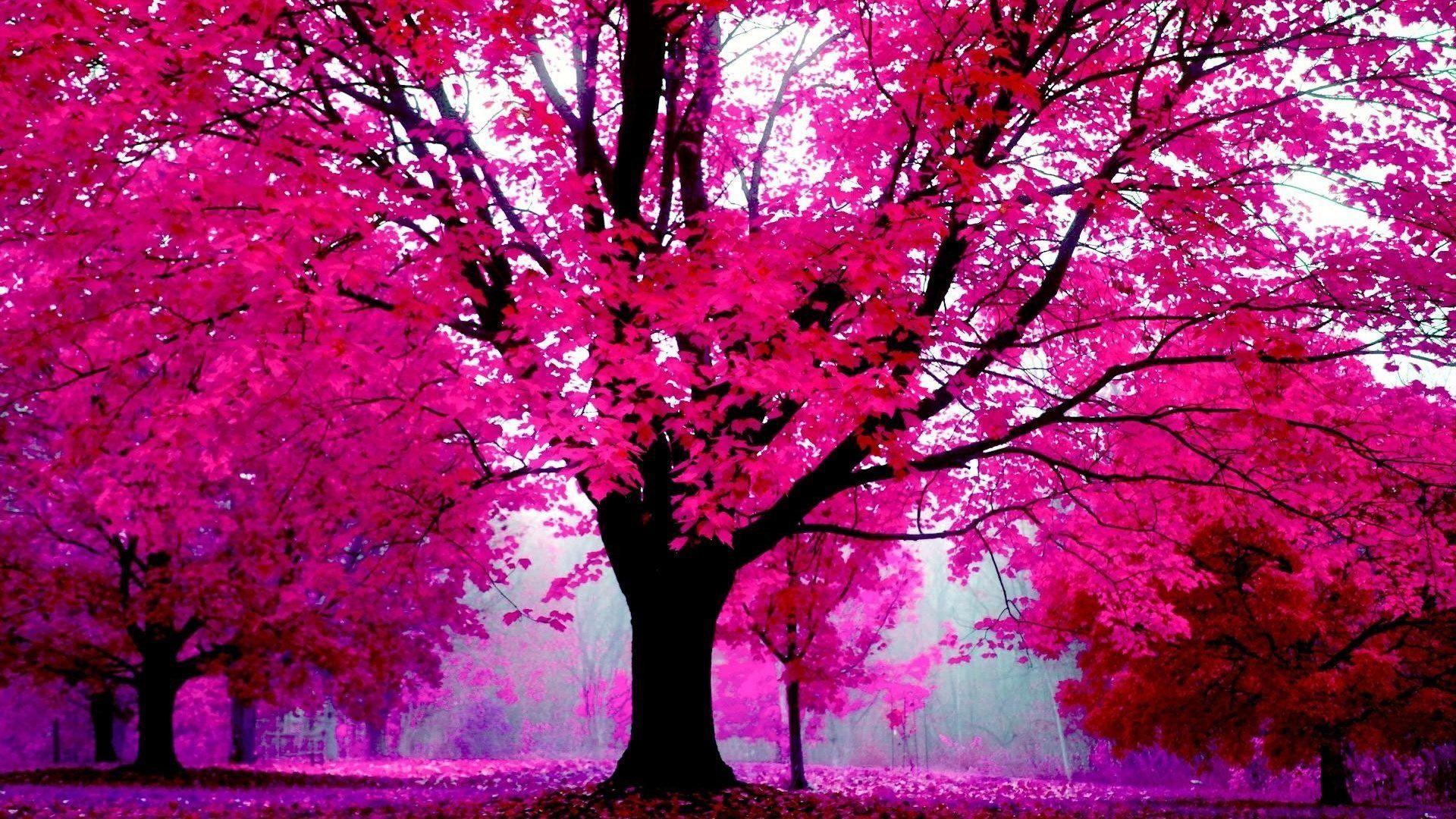 Vera Curaj Minuz On Twitter Pink Nature Pink Trees Hd Pink Wallpapers