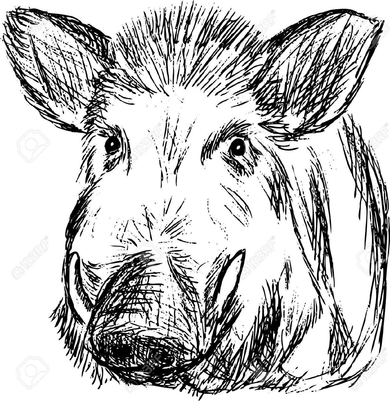 drawing wild boar - Google zoeken