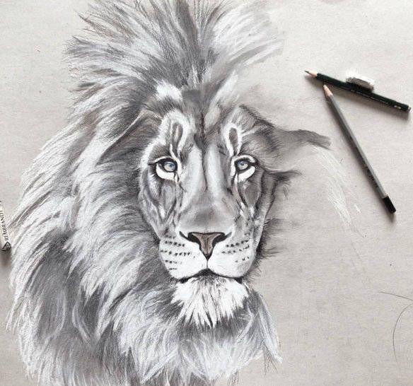 Dibujos A Lapiz Faciles Artisticos Y Paso A Paso Para Aprender A Dibujar Todo Image Aprender A Dibujar Animales Aprender A Dibujar Como Aprender A Dibujar