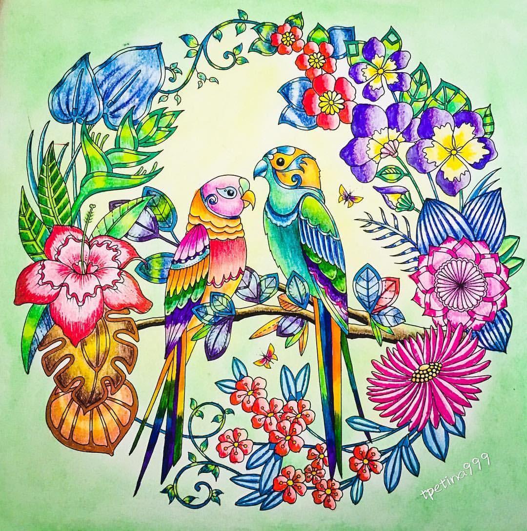 Humming Birds Secret Garden Beija Flores Jardim Secreto Johanna Basford Johanna Basford Coloring Johanna Basford Secret Garden Secret Garden Coloring Book
