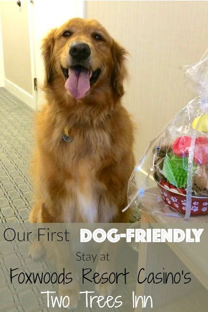 Our First Pet Friendly Hotel Stay Twotreesinn Dog Friendly Hotels Dog Friends Pet Friendly Hotels