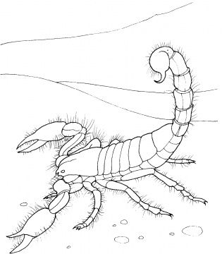 Scorpion coloring pages Laquita Ogle  Activities For Kids