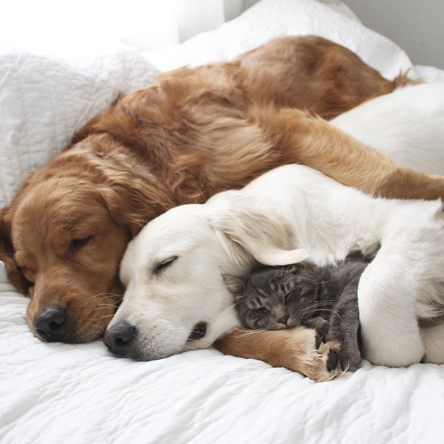Meet Three Best Friends Two Dogs And A Cat Who Love Doing Everything Together Animals Cute Animals Animals Beautiful