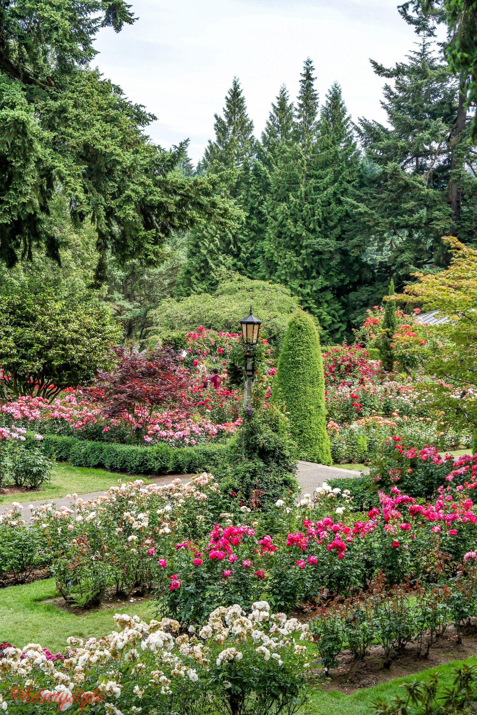 Portland Oregon City Of Roses Rose Garden Portland Portland