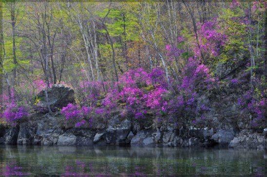(64) Одноклассники   Цветы, Пейзажи