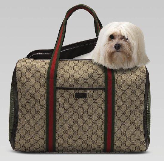 e595ce5f8063 Gucci dog carrier #Maltese | Maltese | Designer dog carriers, Dog ...