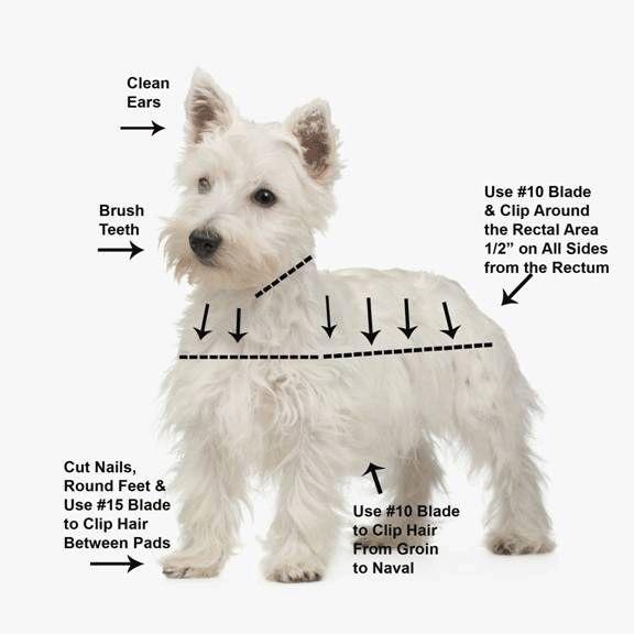 Grooming chart Puppy Love Pinterest Westies West