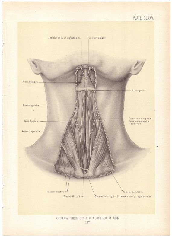 1899 Antique STRUCTURES Near LINE Of NECK Surgical Anatomy ...