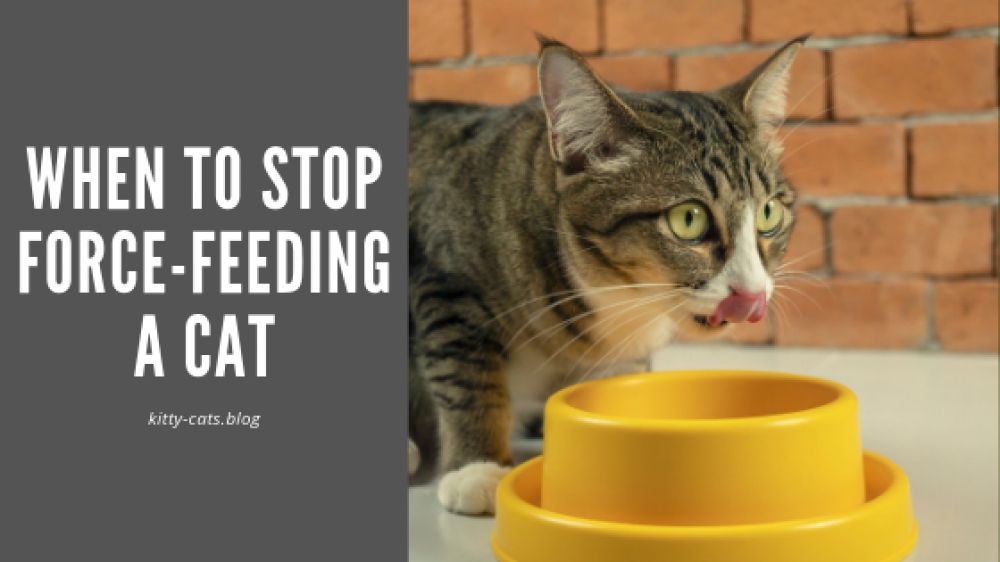 When To Stop Force Feeding A Cat Force Feeding Food Animals Animal Nutrition