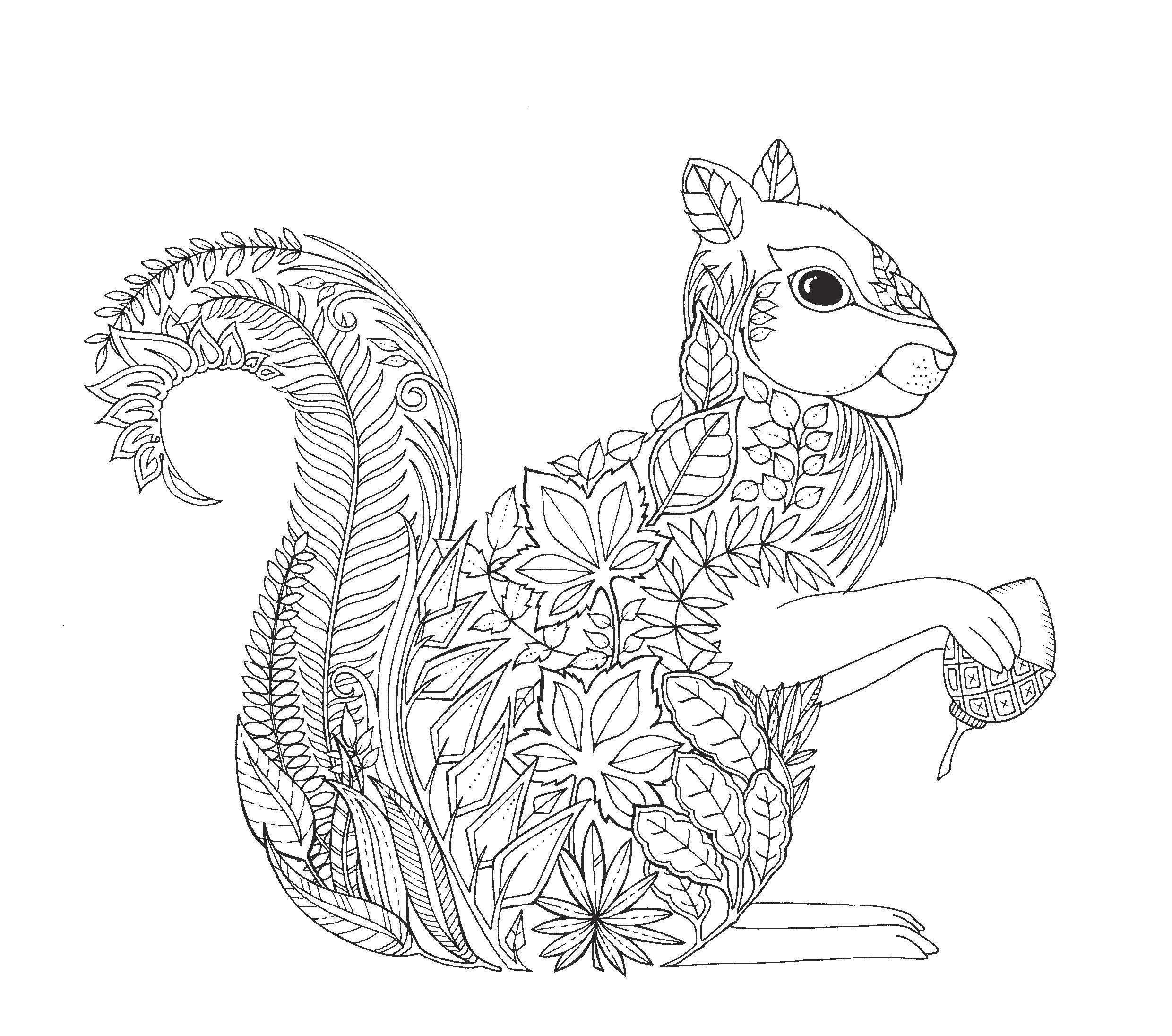 Squirrel Artist Johanna Basford Enchanted Forest Coloring Pages Garden Flower Colouring Adult Detailed Advanced Printable Kleuren