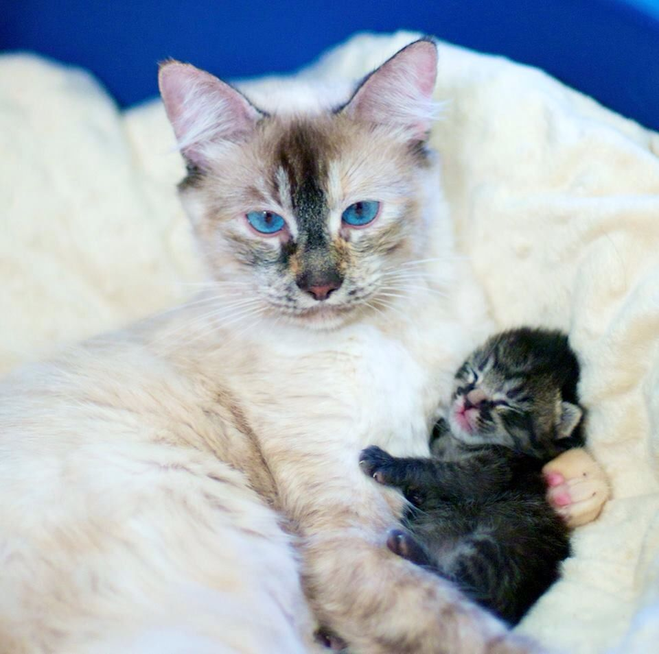 Mommy With Her Precious Little Baby 4 Cats Kittens