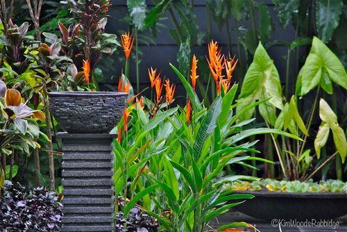 Mass Planted Tropical Garden Google Search Gorgeous Garden