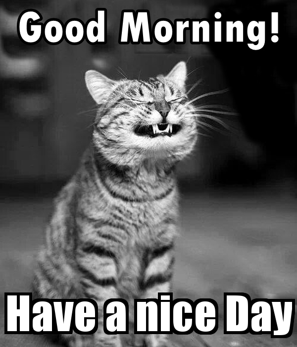 Funny Good Morning Quotes Messages Memes Images Pics Good Morning Quotes Mess Funny Good Morning Memes Funny Good Morning Images Morning Quotes Funny