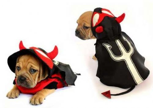 Pin On Angels And Devil Costumes For Dogs