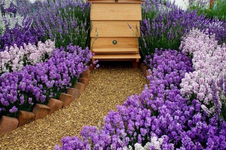 35+ Beautiful Bee Friendly Garden Designs Productive
