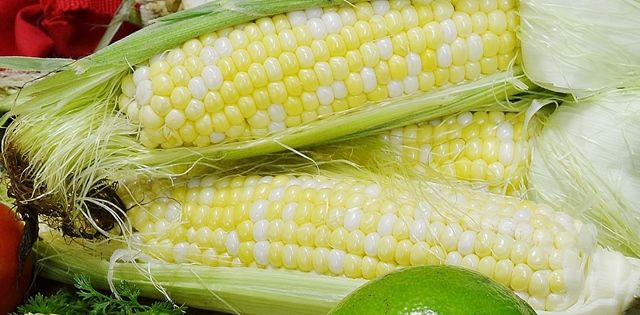 Rada cutlery how to cook corn on the cob the best knife to cut learn the best way to cut the kernels of sweet corn off the cob video demonstration to find the best swweet corn knife also tips for cooking sweet corn ccuart Choice Image