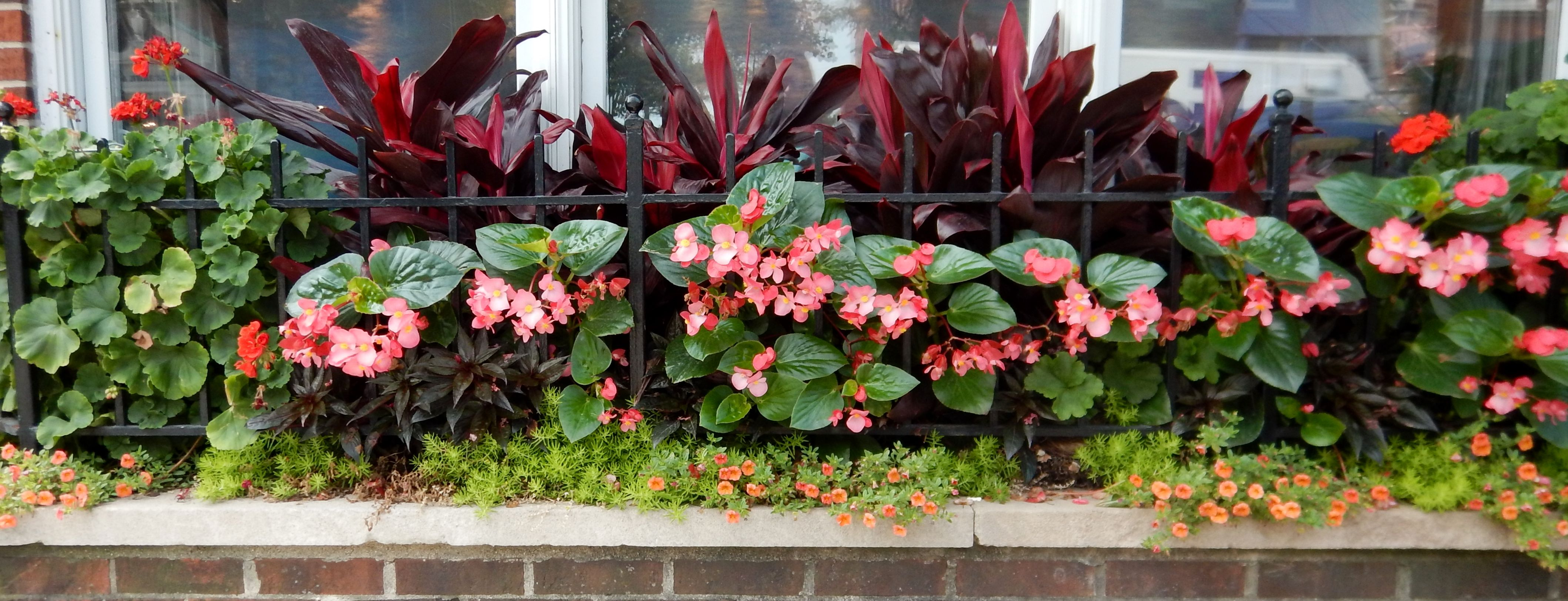summer planting window box for one of our commercial clients