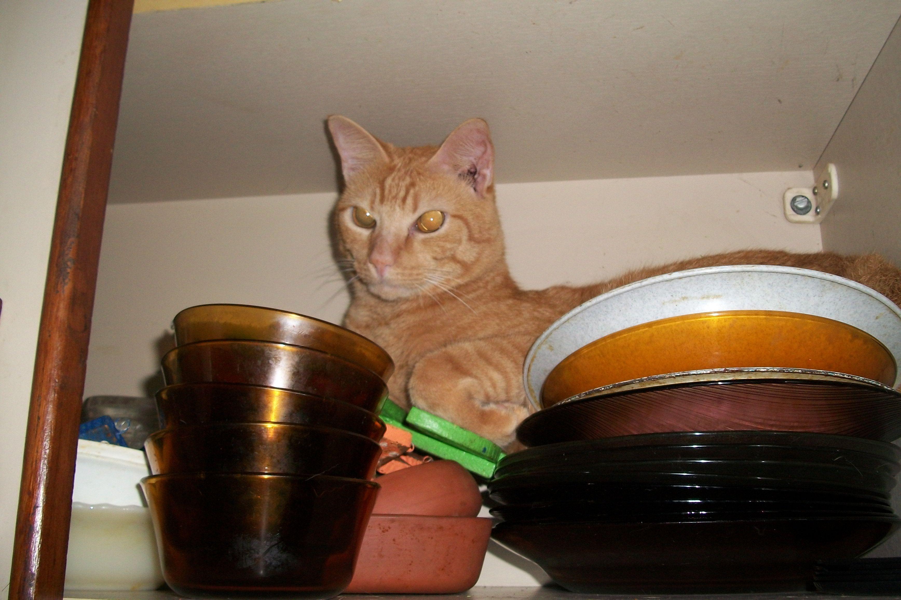 Pipico José dentro do armário de louça- 1 ano e 10  meses