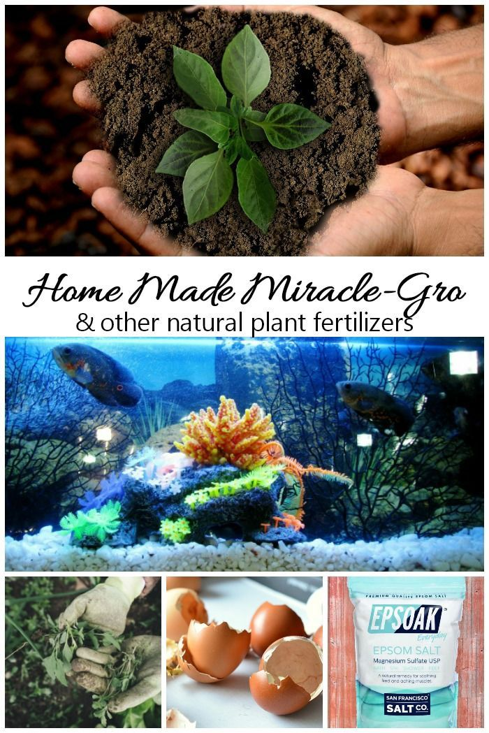 Home Made Miracle Grow Make your Own Homemade Plant