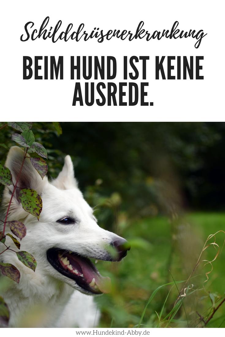 Warum Eine Schilddrusenerkrankung Keine Verdammte Ausrede Ist Hundekind Abby Hundeblog Hunde Schilddrusenerkrankung Hundeerziehung