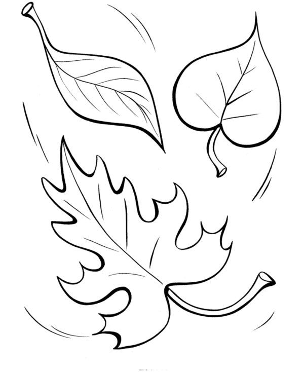 Sassy image with regard to fall leaves coloring pages printable