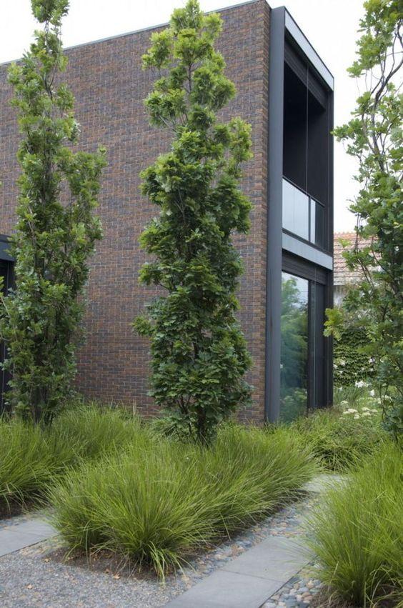 Columnar Trees And Ornamental Grasses Modern Landscaping Garden Architecture Landscape Design