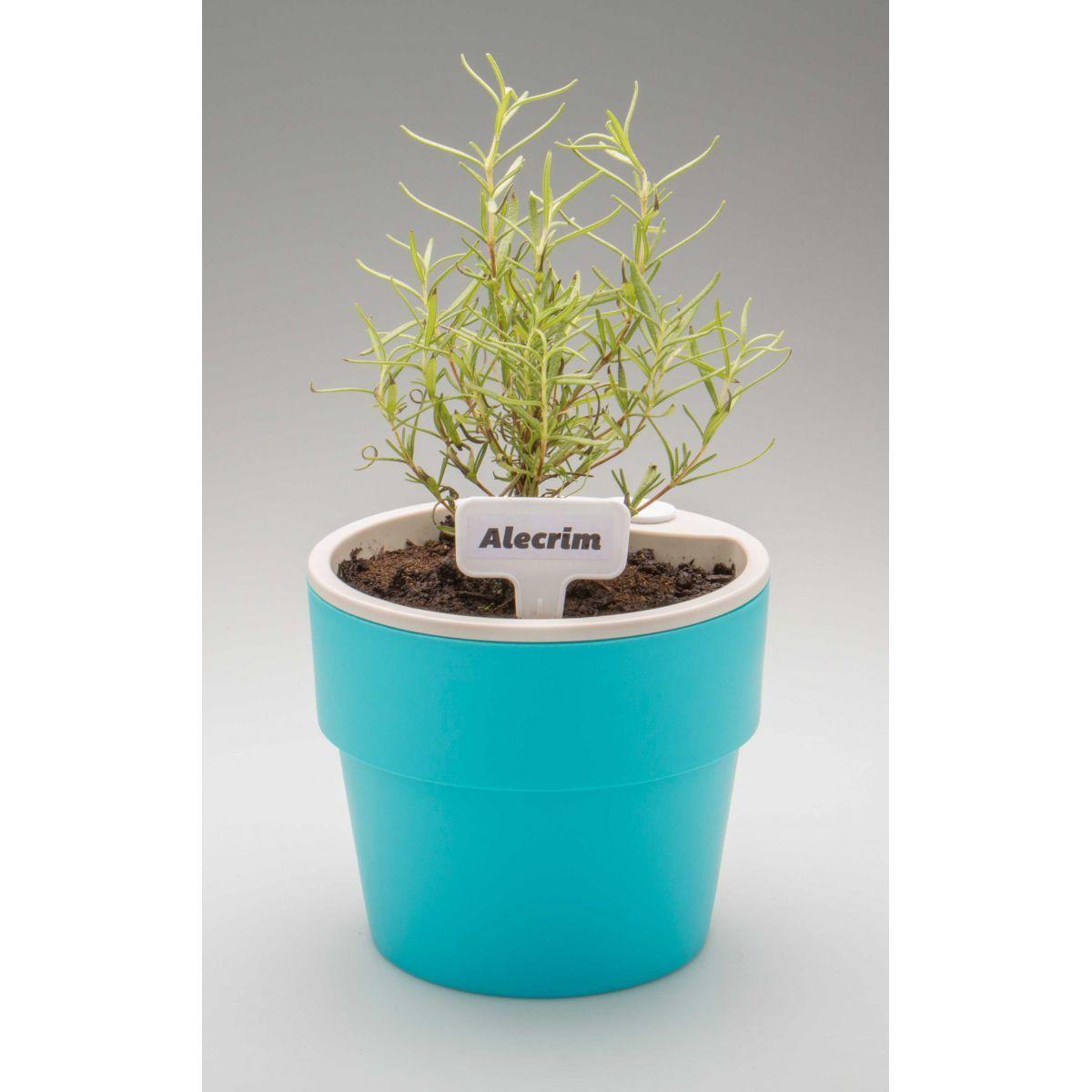 1f13dcb2f Vaso Autoirrigável Grande Azul Linha Plantar - Plantei Garden Center ...