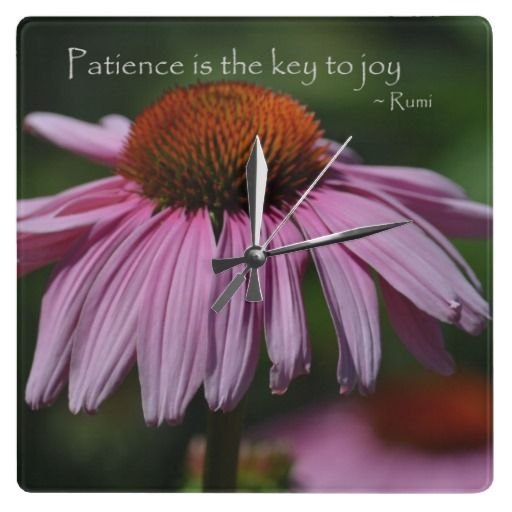 Echinacea With Patience Quote Patience Quotes Together Quotes Patience