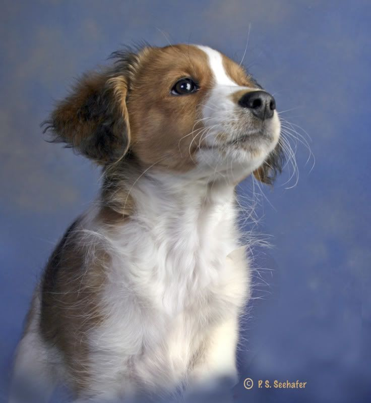 Artistic1 Photos S Image Unique Dog Breeds Cute Dogs Breeds Shepherd Dog Breeds