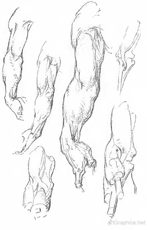 drawing hand and forearm, anatomy for artists, free anatomy art book ...