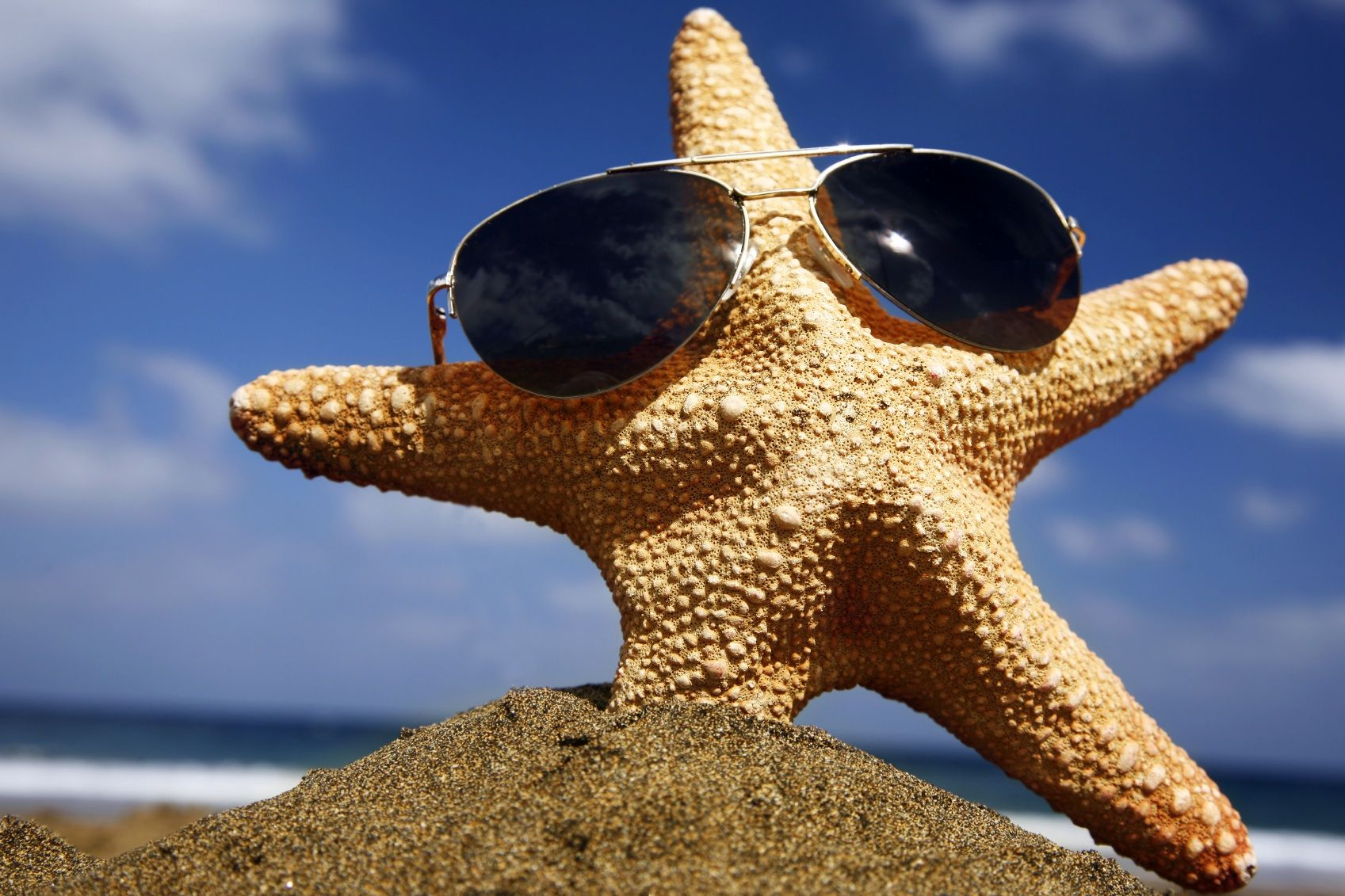 Image result for sea star