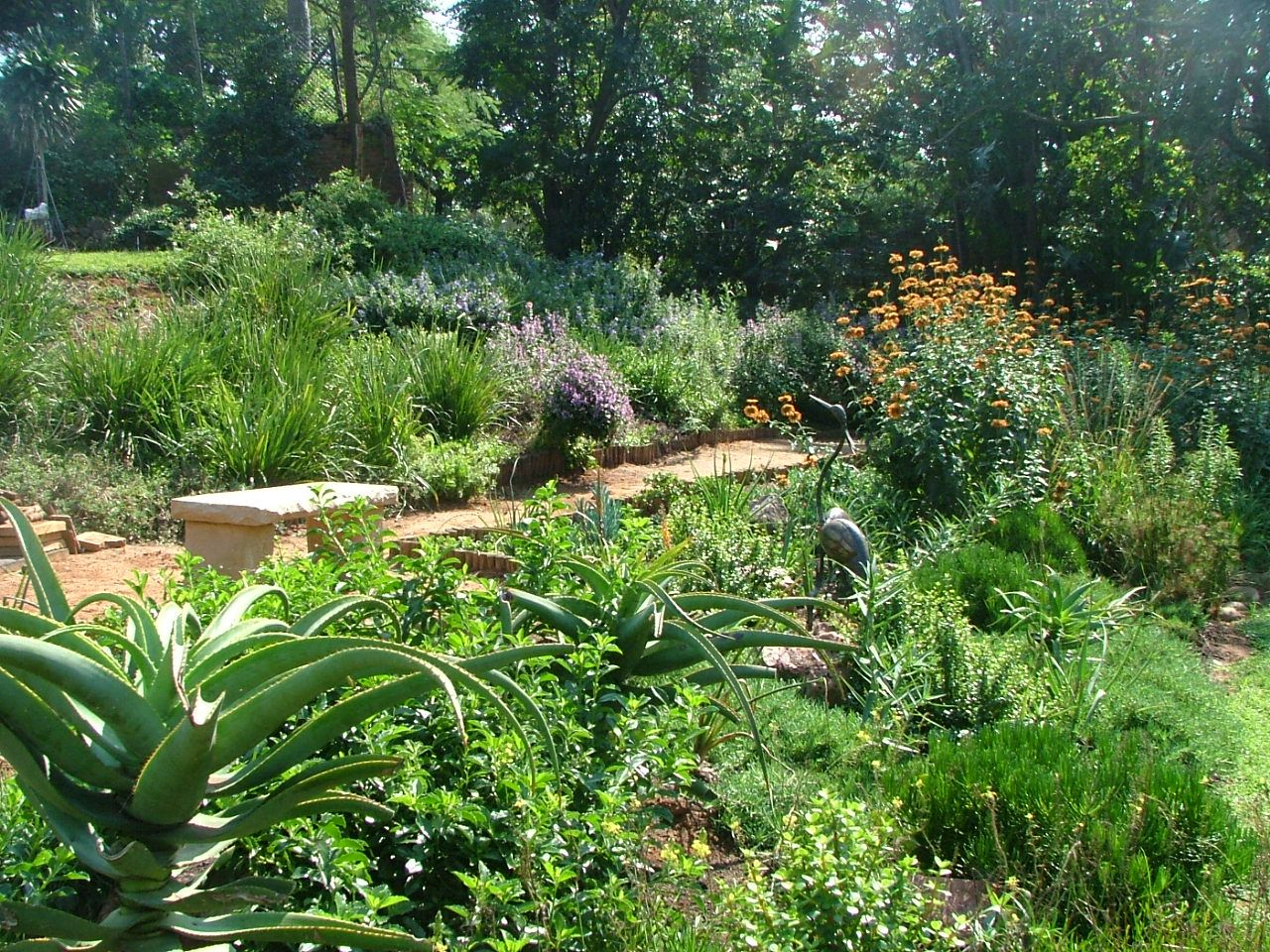 Indigenous south african garden google search garden for Garden ideas south africa