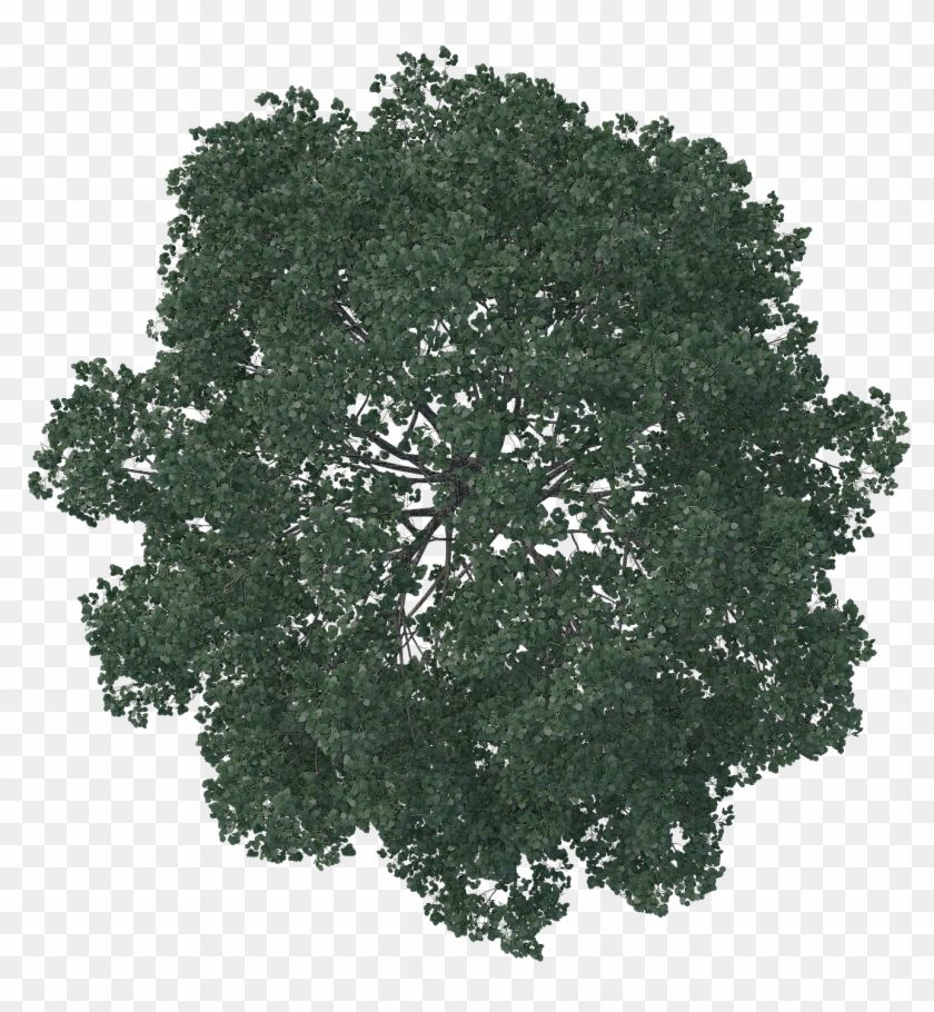 Find Hd Tree Plan Png Trees Top View Tree Photoshop Landscape Transparent Background Tree Png Plan Png Tree Photoshop Tree Plan Photoshop Trees Top View