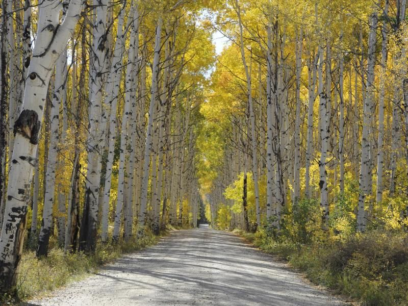 Visit the Sierra Madres and experience Aspen Alley
