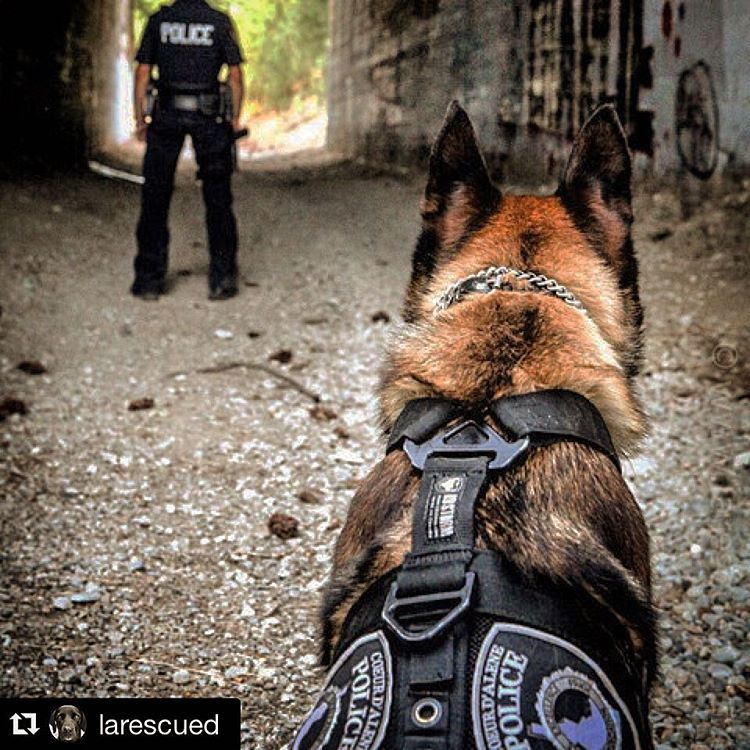 K9 Storm Inc. (k9storminc) • Instagram photos and videos