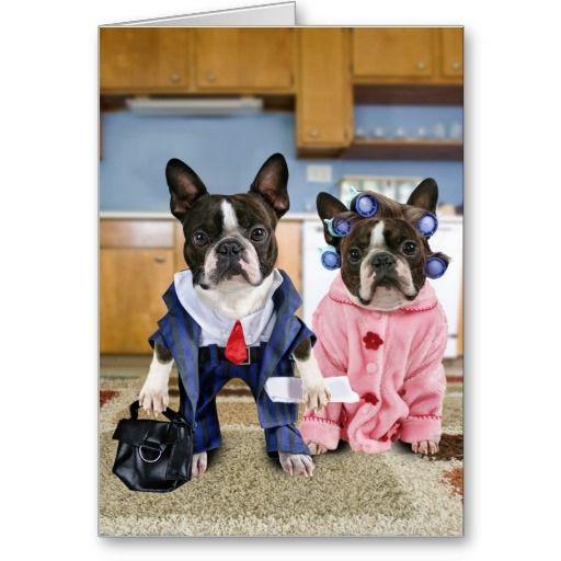 Boston Terrier Couple Off To Work Boston Terrier Boston Terrier