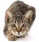 Your business case critic: De-Clawing the Cat