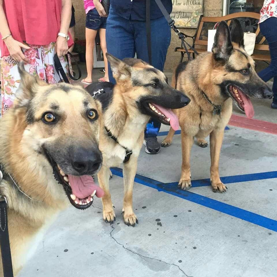 German Shepherd Rescue Of Orange County German Shepherd Dogs German Shepherd Rescue German Shepherd