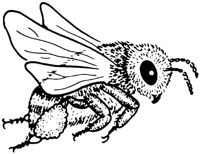 Bee 5 Coloring Page From Bees Category Select 27237 Printable Crafts Of Cartoons Nature Animals Bible And Many More