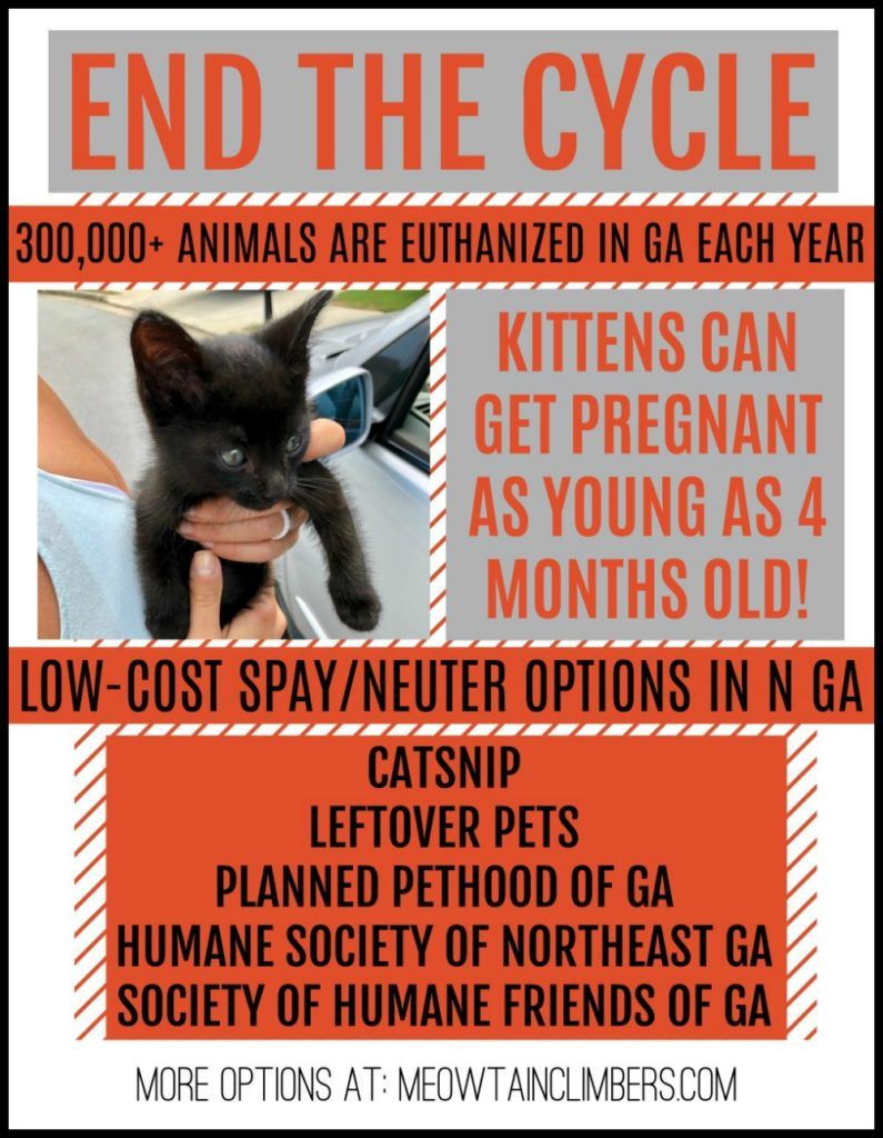 Help End Pet Overpopulation By Spaying Or Neutering Your Pets Use