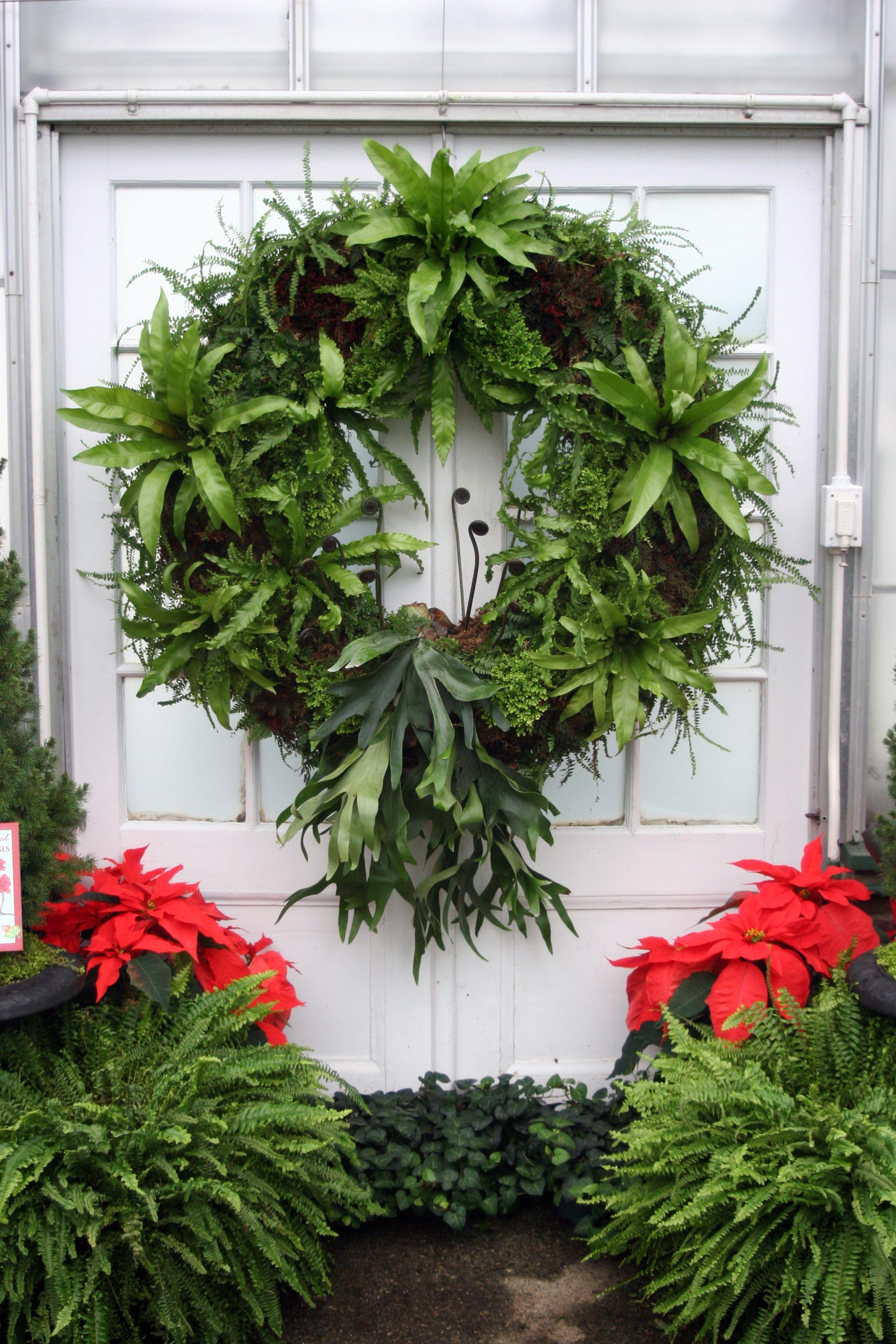 fern wreath, longwood gardens | all my boards are plants ...
