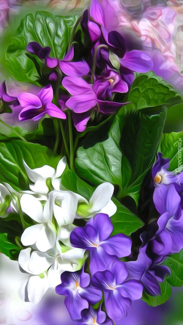 Kolorowe Fiolki Wonne Tapeta Na Telefon Flowers Wallpaper Plants