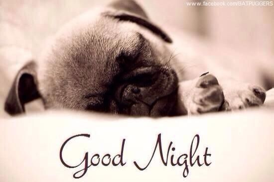 Good Night Pug Pugs Baby Pugs Baby Pugs For Sale